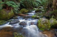 Toorongo River cascades